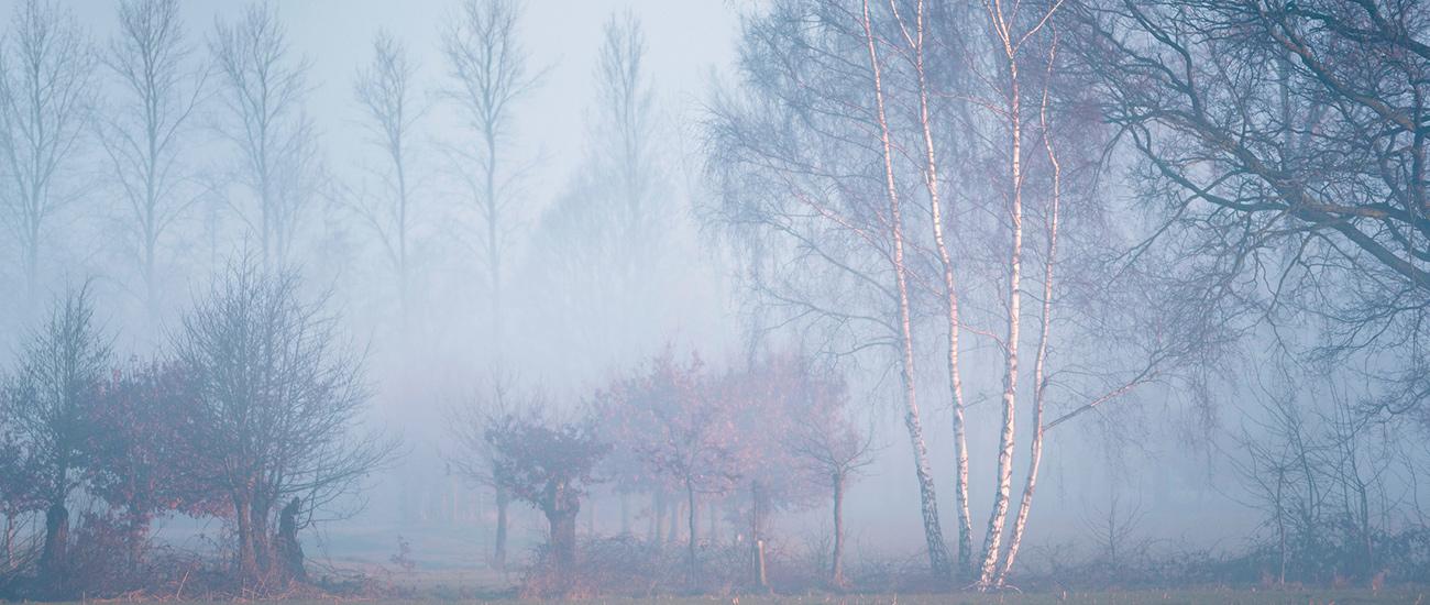 pianura_nebbia
